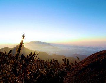 Pico dos Marins - Solo