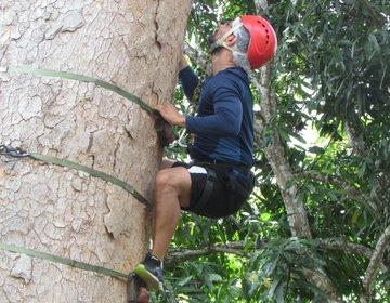 Trilha com obstáculos, Tree Climbing e Tirolesa
