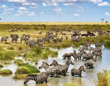 We are from east Africa,travel&tours situated in Tanzania ci
