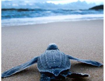 Tartaruga é Vida