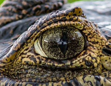 Pantanal Workshop Fotográfico