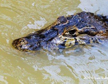 Pantanal Norte - Mato Grosso