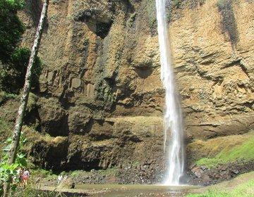Trilha das Árvores Gigantes e Camping Cachoeira do Saltão