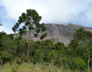 Guia - Taquaril