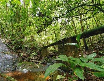 Trilha da Cachoeira, Parque Estadual da Cantareira | Brasil