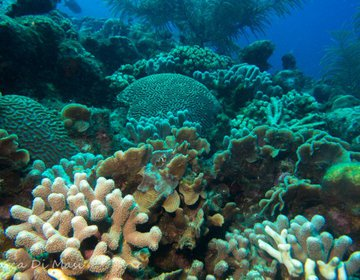 Bonaire - Só os Mergulhadores Sabem Onde É