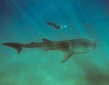 Mergulhos de Pesquisa e Aventura em Moçambique