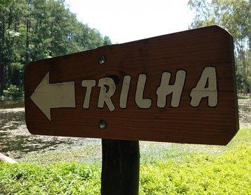 Horto florestal Tupi- Piracicaba