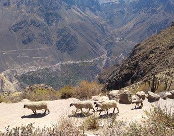 Peru CAÑON DEL COLCA- TREKKING