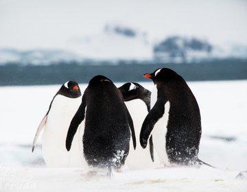 Antarctic Cruise Ship | 20-29 Nov 2014