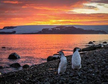 Relato de viagem: Antártica